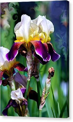 Colorful Iris Grandeur Canvas Print by Karon Melillo DeVega