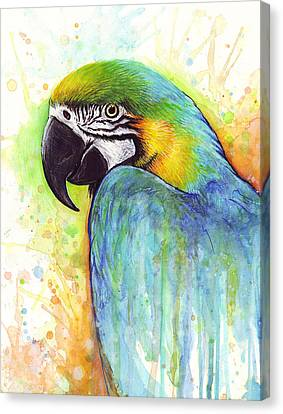 Macaw Painting Canvas Print by Olga Shvartsur