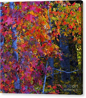 Colorful Maple Leaves Canvas Print by Scott Cameron