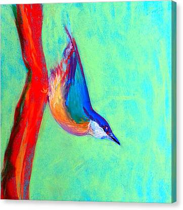 Colorful Nuthatch Bird Canvas Print by Sue Jacobi