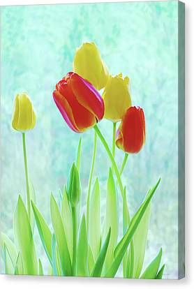 Colorful Spring Tulip Flowers Canvas Print by Jennie Marie Schell