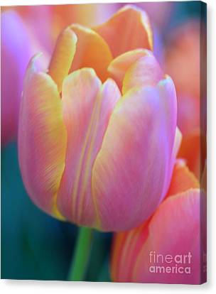 Colorful Tulip Canvas Print by Kathleen Struckle