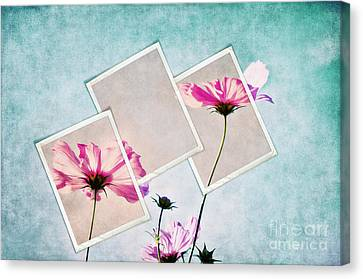 Colors Of Nature Canvas Print by Angela Doelling AD DESIGN Photo and PhotoArt