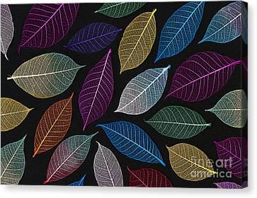 Coloured Leaf Skeleton Pattern Canvas Print by Tim Gainey