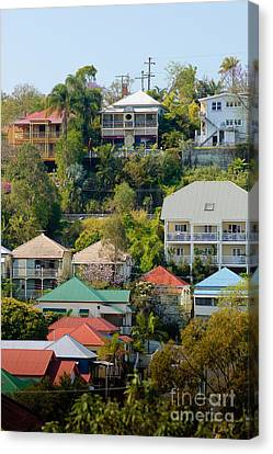 Colourful Queenslander Houses On A Steep Hillside  Canvas Print by David Hill