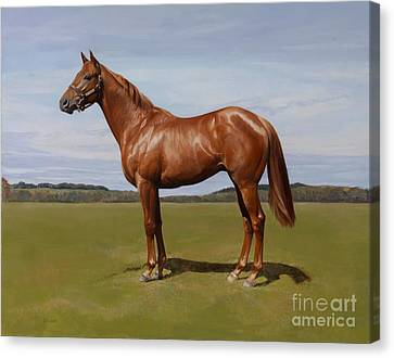 Colt Canvas Print by Emma Kennaway