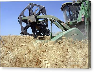 Combine Harvester  Canvas Print by Shay Fogelman