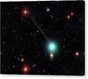 Comet Encke Canvas Print by Damian Peach