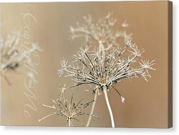 Comfort Me Canvas Print by Diana Angstadt