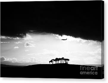 Coming Into Land  Canvas Print by Tim Gainey