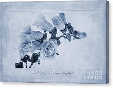 Common Foxglove Cyanotype Canvas Print by John Edwards