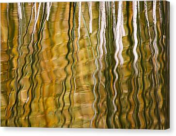 Common Reed Reflecting In Water Canvas Print by Heike Odermatt