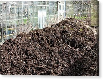 Compost Heap Canvas Print by Ashley Cooper