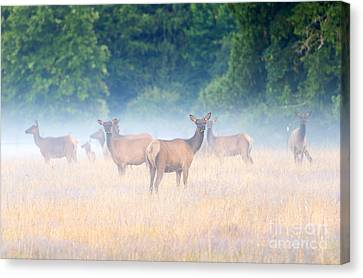 Concealed By The Fog Canvas Print by Mike Dawson