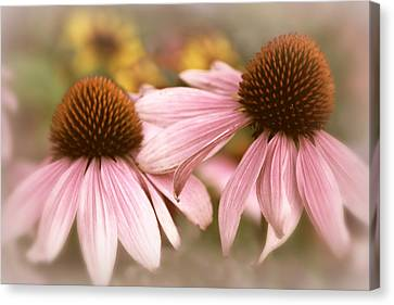 Cone Flowers Canvas Print by Jessica Jenney