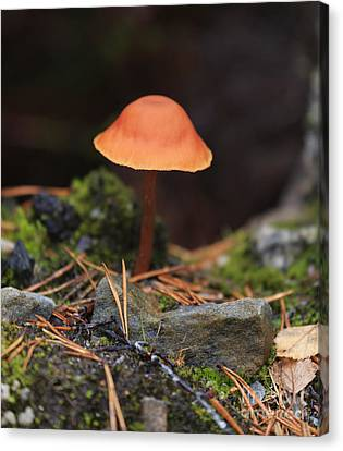 Conical Wax Cap Mushroom Canvas Print by Louise Heusinkveld