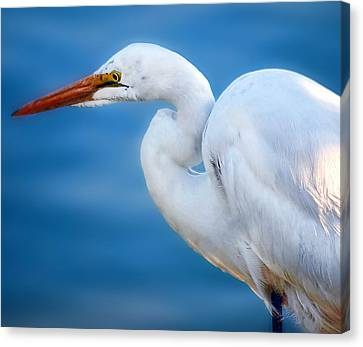 Contemplating Flight Canvas Print by Camille Lopez