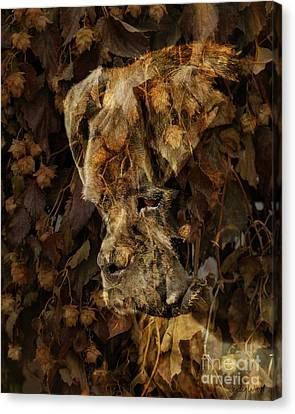 Contemplation Canvas Print by Judy Wood