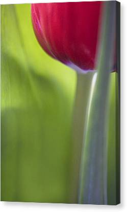 Contemporary Tulip Close Up Canvas Print by Natalie Kinnear