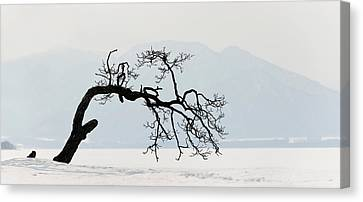 Contorted Tree At A Frozen Lake, Lake Canvas Print by Panoramic Images