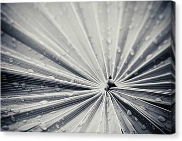 Convergence Canvas Print by Adam Romanowicz