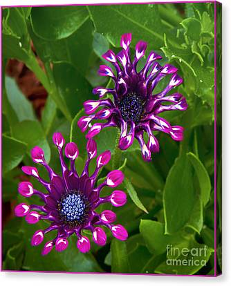 Cool Flowers Canvas Print by Timothy J Berndt