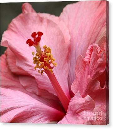 Coral Hibiscus Canvas Print by Sabrina L Ryan