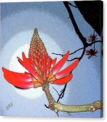 Coral Tree Canvas Print by Ben and Raisa Gertsberg