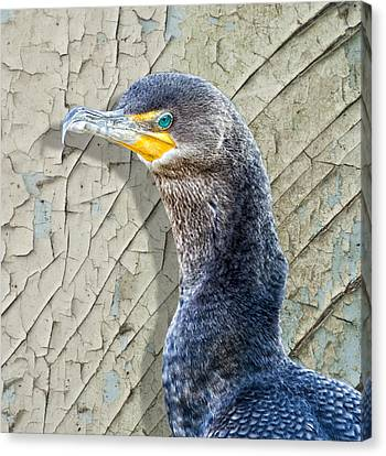 Cormorant By Cracked Paint Canvas Print by Bill Tiepelman