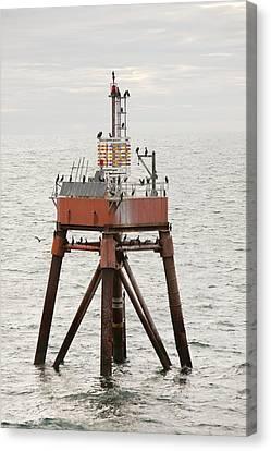 Cormorants On A Channel Light Canvas Print by Ashley Cooper