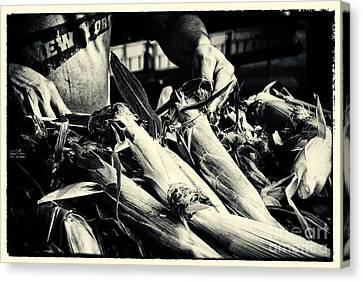 Corn Cobs At The Market New York City Canvas Print by Sabine Jacobs