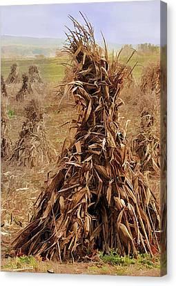 Corn Stalk Bales Canvas Print by Marcia Colelli
