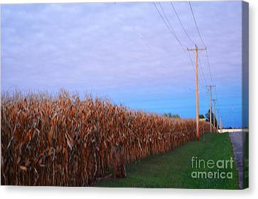 Cornfield In Autumn Canvas Print by Luther   Fine Art