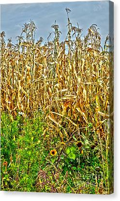 Cornfield Canvas Print by Baywest Imaging
