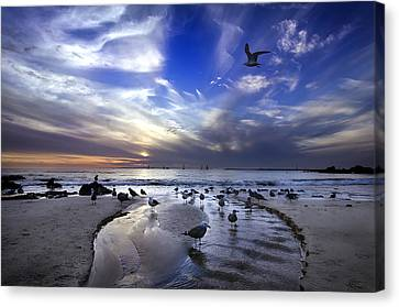 Corona Del Mar Canvas Print by Sean Foster