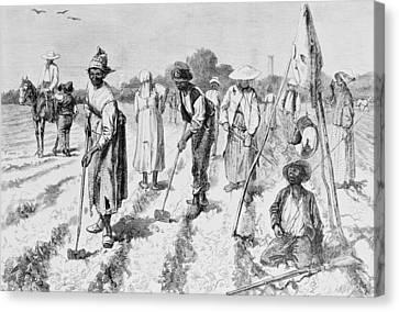 Cotton Plantation Canvas Print by Edwin Austin Abbey