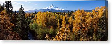 Cottonwood Trees In A Forest, Mt Hood Canvas Print by Panoramic Images