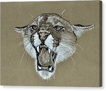 Cougar 1 Canvas Print by David McDowell