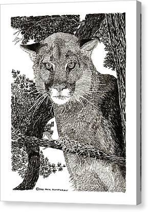 Cougar From Colorado Canvas Print by Jack Pumphrey