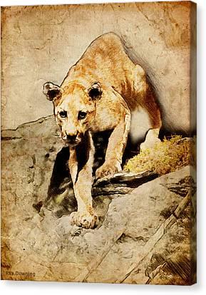 Cougar Hunting Canvas Print by Ray Downing