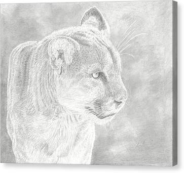 Cougars Gaze Canvas Print by Laura Klassen