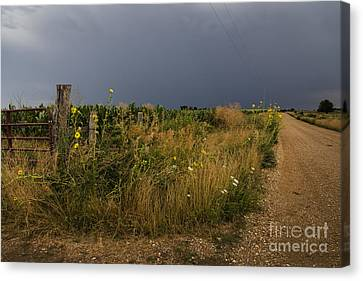 Country Road Canvas Print by Dennis Hedberg