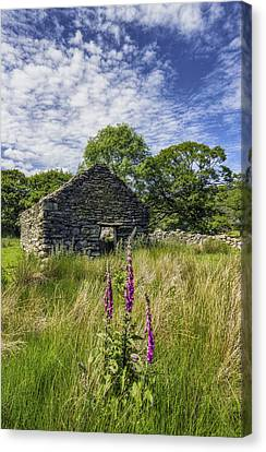 Countryside Ruin Canvas Print by Ian Mitchell