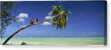 Couple On Trunk Of A Palm Tree Canvas Print by Panoramic Images