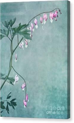 Couricino Canvas Print by Priska Wettstein