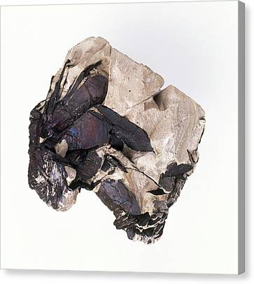 Covellite In Clay Groundmass Canvas Print by Dorling Kindersley/uig