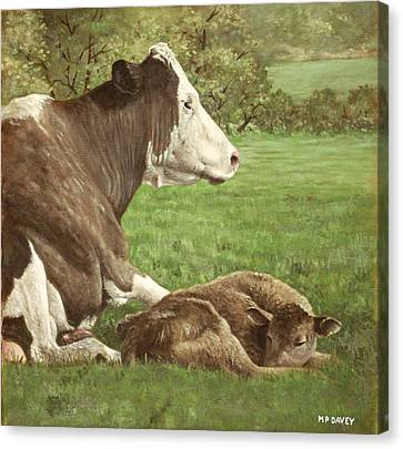 Cow And Calf In Field Canvas Print by Martin Davey