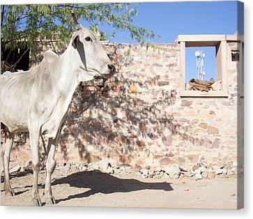 Cow And Stonewall With Communications Canvas Print by David H. Wells