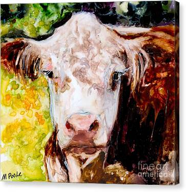 Cow Face Canvas Print by Molly Poole