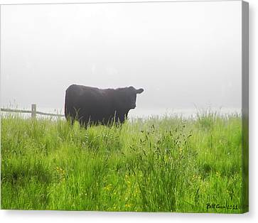 Cow In Fog Canvas Print by Bill Cannon
